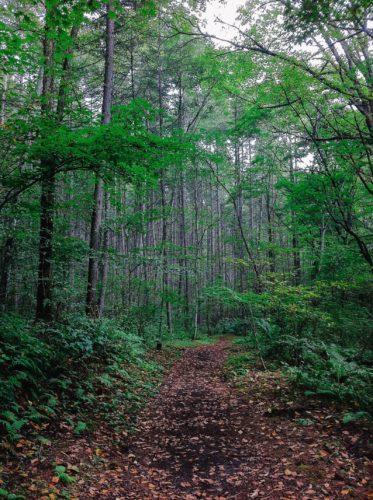 森の中へと続く道